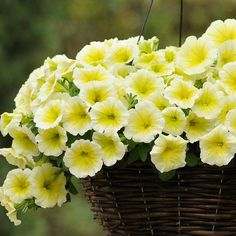 EASY WAVE YELLOW Trailing Petunia Seeds  Large, 2 1/4 inch creamy-edged flowers have veined yellow centers. Easy Wave Yellow creates neat mounds 8 to 12 inches tall, spreading to 2 1/2 feet wide. Easy Waves perform beautifully in hanging baskets, garden beds and containers. 10 pelleted seeds - $4.49