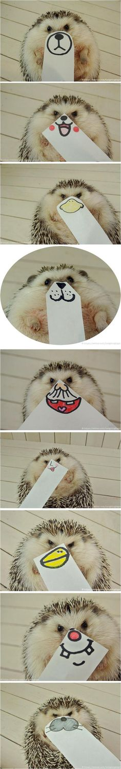 The many faces of a hedgehog  // funny pictures - funny photos - funny images - funny pics - funny quotes - #lol #humor #funnypictures