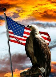 America The Beautiful May she turn back to God. Wrong eagle but long may the American flag fly. American Pride, American History, American Flag, American Soldiers, American Symbols, American Spirit, Native American, I Love America, God Bless America