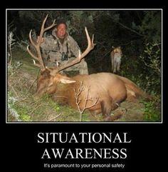 Feel Like Cougar Hunting?