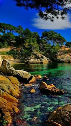 beautiful scenery, trees on a rocky shore with clear water Beautiful Nature Pictures, Amazing Nature, Nature Photos, Beautiful Landscapes, Beautiful World, Cool Pictures, Landscape Photos, Landscape Photography, Nature Photography