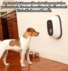 Pet-cam that lets you video chat with your pet while you're away. AND dispenses treats!