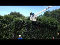 Professional Tree Service Company Seattle WA   Tree Care Experts