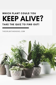 Do you struggle with keeping your indoor plants alive?! Take this short, 2-question quiz to see which houseplant you'd be able to easily keep alive! #indoorplantsmakepeoplehappy #interiordesign Best Indoor Plant | Easy Indoor Plants | Easy Houseplant | Best Easy Indoor Plants | House Plants Decor, Plant Decor, Air Plants, Indoor Plants, Low Light Plants, Keep Alive, Low Lights, Plant Care, Houseplants
