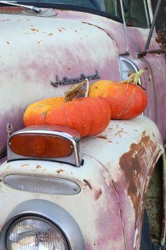 Best pumpkin patch near Seattle