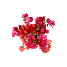 Bougainvillea ❤ liked on Polyvore featuring home, home decor, floral decor, flowers, plants, fillers, backgrounds, decorations, effect and outdoor home decor