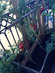 Plus de 1000 id es propos de jardin gardening sur pinterest comment pots et plates bandes - Comment faire germer des graines de tomates ...