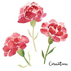 Set of three sketch style red watercolor carnation flowers isolated on white background. Beautiful sketch, sumi-e style carnation flowers isolated on white background, greeting card decoration Watercolor Kit, Watercolor Flowers, Carnation Drawing, Flower Drawing Tutorials, Watercolor Paintings For Beginners, Illustration Blume, Garden Wall Art, Flower Artists, Beautiful Sketches