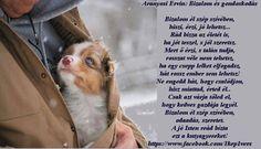 Aranyosi Ervin: Bizalom é Westies, Poems, Motivation, Quotes, Life, Animals, Ariel, Vans, Thoughts