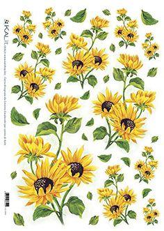 Pin de carmen loli en laminas flores prints of flowers for Plantas decorativas amazon