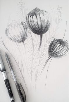 Proteas and Sunlight drawing