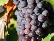 Recette de liqueur de raisin