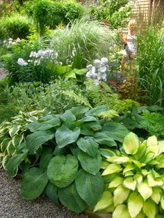 Love this border...different varieties of hosta planted together