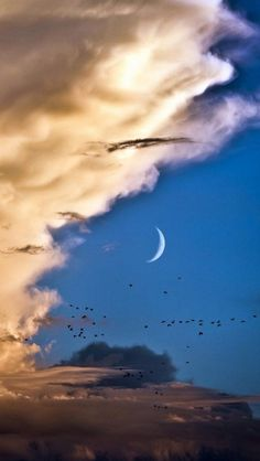 Moon, Venus, Clouds, Birds