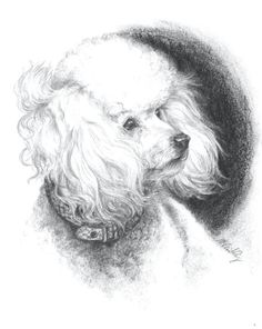 Poodle in the Wind, charcoal drawing via nancy-mccarthy.com
