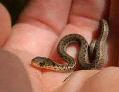 #baby #snake
