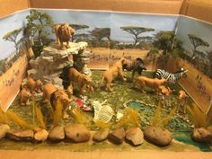The final results of my son's lion habitat diorama project.