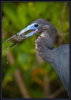 Preditor / Prey - Sanibel Island, Florida