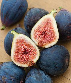 Black Mission Fig Seeds and Plants, Vegetable Seeds at Burpee.com