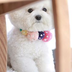 Cute Cats And Dogs, I Love Dogs, Animals And Pets, Cute Animals, Baby Dogs, Pet Dogs, Dog Cat, Doggies, Bichon Dog