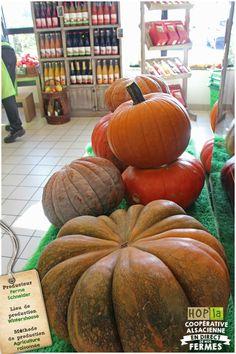Strasbourg, Pumpkin, Vegetables, Food, Pumpkins, Essen, Vegetable Recipes, Meals, Squash