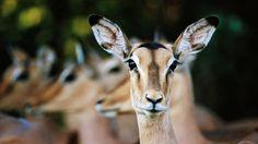 AFRIQUE DU SUD // Conseils pour un Safari