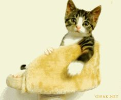 """Come Back Here, Fingers - my daughter says its """"SOO ADOWWABLE"""""""
