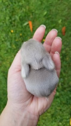 Bunny Therapy @ Blue Clover Rabbitry Bunny Therapy @ Blue Clover Rabbitry Gallery IdeYou can find Baby bunnies . Super Cute Animals, Cute Little Animals, Cute Funny Animals, Cute Cats, Baby Animals Pictures, Cute Animal Photos, Animals And Pets, Cute Baby Bunnies, Cute Babies