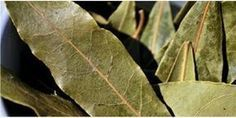 Burn A Few Dried Bay Leaves In Your Home And Feel An Immediate Change To The Atmosphere - Juicing for Health Mental Health Illnesses, Mental Health And Wellbeing, Natural Remedies For Anxiety, Anxiety Remedies, What Is Bay, Burning Bay Leaves, Laurel Tree, Medicinal Plants, Loosing Weight
