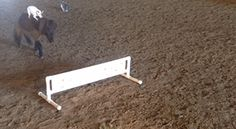 horse jumping funny - Google Search