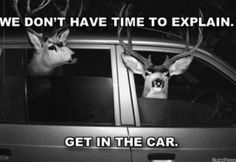 Not happening, my deers!