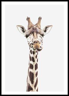Baby giraffe, poster in der Gruppe Poster / Kinder bei www.desenio.de