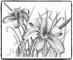 Lilies (2012) is an ink rendering of my favourite flower