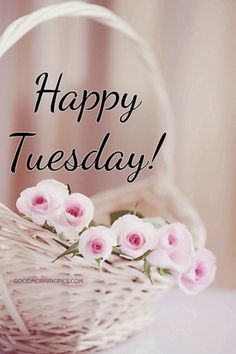 Good Night Quotes : Happy tuesday - Quotes Sayings Happy Tuesday Images, Happy Tuesday Morning, Good Morning Flowers, Good Morning Messages, Good Morning Good Night, Good Morning Wishes, Happy Weekend, Happy Thursday, Sunday Morning
