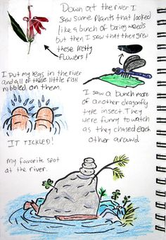 nature journals seem like a great way to explore and learn about nature