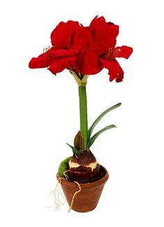 Askham Flower & Gift Delivery for all occasions. Whether you are looking for luxury or budget, our flower shops have what you are looking for. Gift Delivery, Red Silk, Clay Pots, Silk Flowers, Planting Flowers, Cape, Plants, Gifts, Mantle