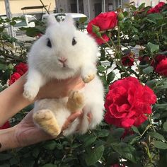 Cute little flower bunny Cute Creatures, Beautiful Creatures, Animals Beautiful, Animals And Pets, Baby Animals, Cute Animals, Amor Animal, Cat Dog, Cute Bunny