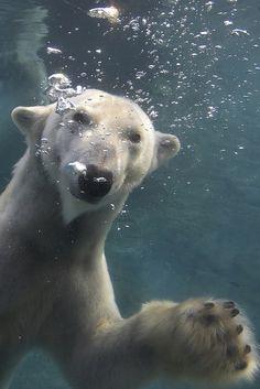 """Go U Bears!""   San Diego Zoo"