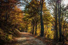 #Orange forest. Bielmonte, #Oasi #Zegna, #Italy. www.oasizegna.com