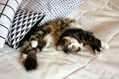 My cat Sixten know´s how to relax