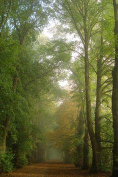 ~The Avenue, Shotover Estate, Oxfordshire, England~