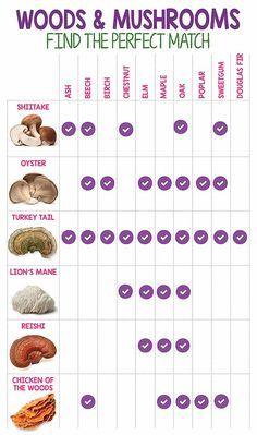 how to grow edible mushrooms * mushrooms edible - mushrooms edible identification - edible mushrooms chart - types of edible mushrooms - growing edible mushrooms - edible mushrooms photography - how to grow edible mushrooms - mushrooms types edible Edible Wild Mushrooms, Garden Mushrooms, Stuffed Mushrooms, Edible Plants, Edible Garden, Culture Champignon, Container Gardening, Gardening Tips, Gardening Magazines