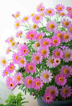 Экзотические Цветы, Красивые Цветы, Цветочные Букеты, Изготовление Цветов, Красивые Сады, Садовые Растения, Красочные Цветы, Желтые Цветы, Ландшафт