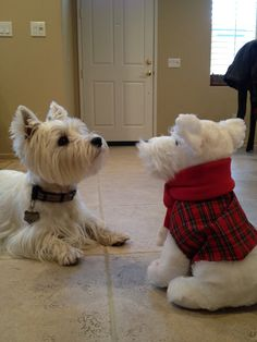 """""""Very well. I accept your offering. He shall make a satisfactory valet or, failing that, a most excellent chew toy."""""""