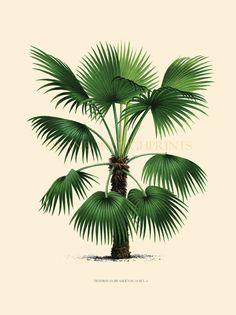 Coastal Living Decor Tropical Palm Trees. Home Decor Vintage Palm Tree Illustration Art Print. Beach Style Bathroom Makeover Wall Art.