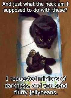 I asked for minions of darkness!!