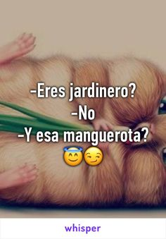 -Eres jardinero? -No -Y esa manguerota? 😇😏 Happy Week, Reading, Mexico City, Reading Books