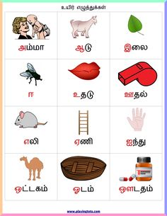 Free printable for kids (toddlers/preschoolers) flash cards/charts/worksheets/(file folder/busy bag/quiet time activities)(English/Tamil) to play and learn at home and classroom. Letter H Activities For Preschool, Alphabet For Toddlers, Toddler Preschool, Time Activities, Toddler Alphabet, Lkg Worksheets, 2nd Grade Worksheets, Kids Math Worksheets, Printable Worksheets