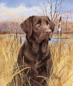 Brown Dog Hound Dog