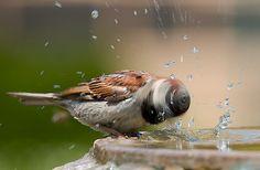 Bird twirl